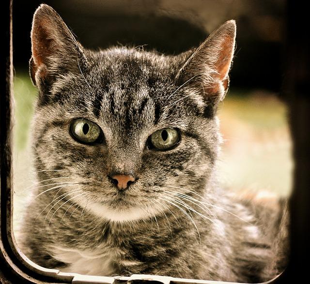 Hoe kunnen automatische kattenbakken u helpen?