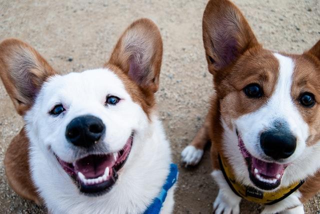 De beste speeltjes waarmee jouw hond zich nooit hoeft te vervelen
